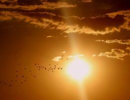 myths about sunscreen
